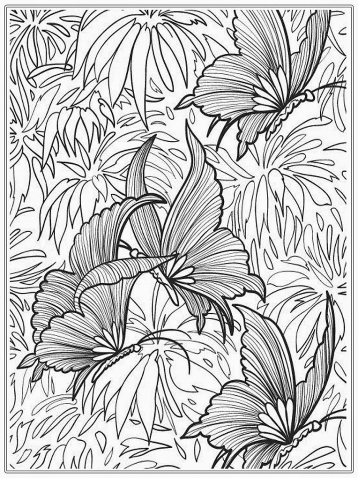 Butterfly Coloring Pages for Adults Free   3dtg5