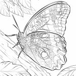 Butterfly Coloring Pages to Print for Adults   21745