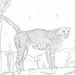 Cheetah Coloring Pages Free to Print   y2cb2
