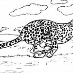 Cheetah Coloring Pages Printable   7nv41