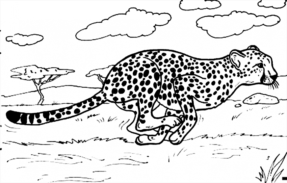 Get This Cheetah Coloring Pages Printable 7nv41 !