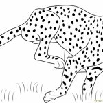Cheetah Coloring Pages Printable   m3sb0