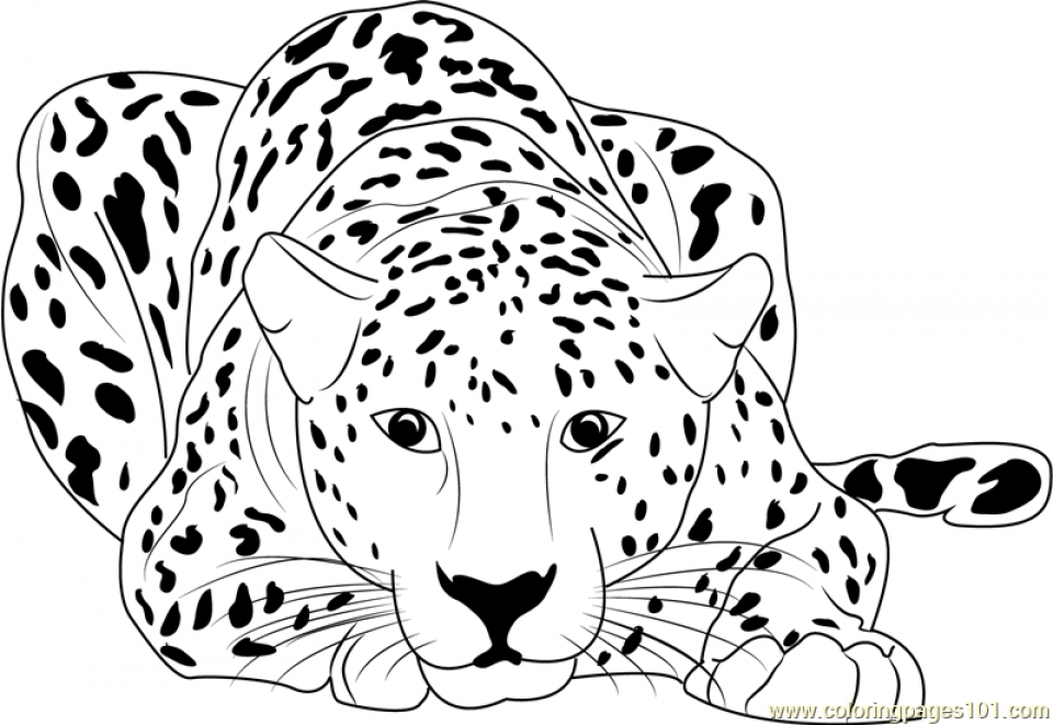 20 Free Printable Cheetah Coloring Pages