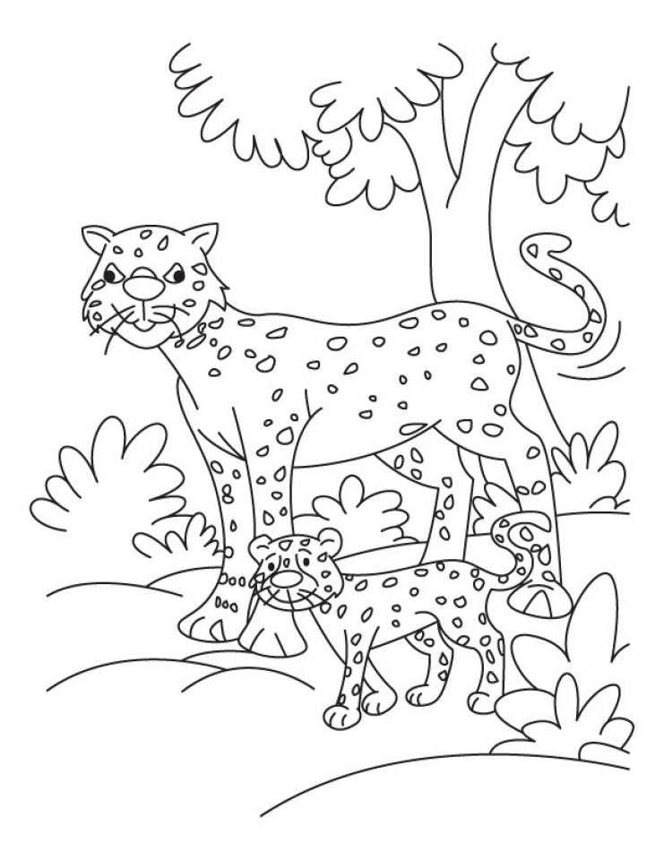 Cheetah Coloring Pages Printable Of Cheetahs With