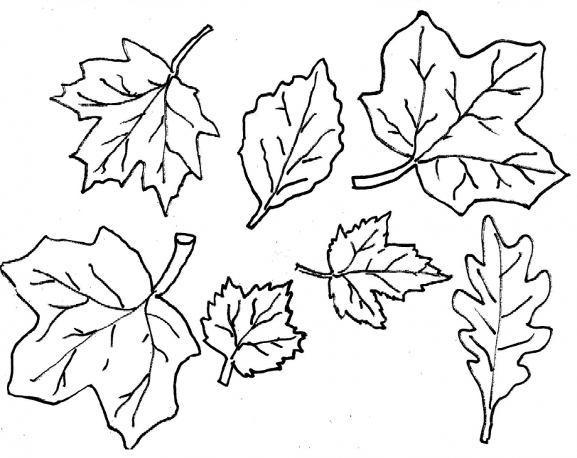 photograph relating to Free Printable Fall Leaves identified as 20+ Free of charge Printable Slide Leaves Coloring Internet pages