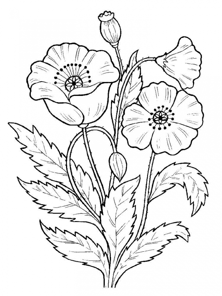 Flowers Coloring Pages Kids Printable   2167