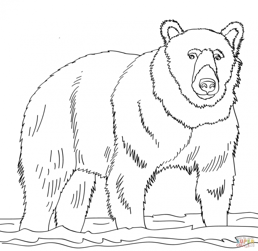 Free Coloring Pages of Bear   6ag30