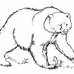Free Coloring Pages of Bear   yat39