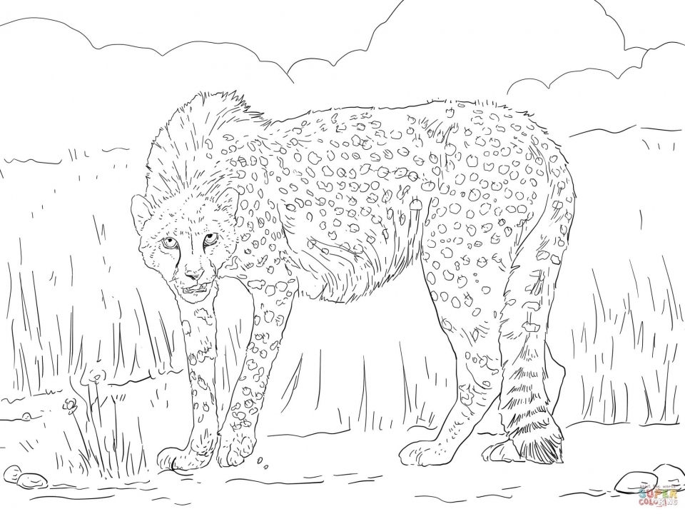 Free Printable Cheetah Coloring Pages   twp29