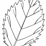 Leaf Coloring Pages Printable   6cv60