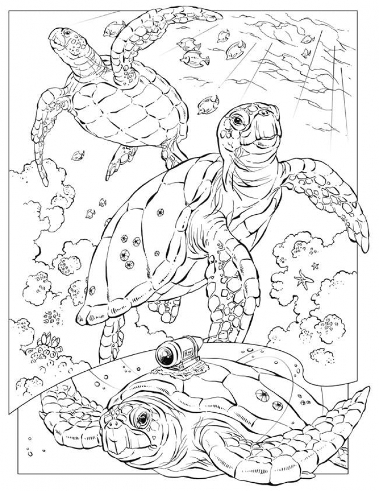 Ocean Coloring Pages for Adults   34c6l
