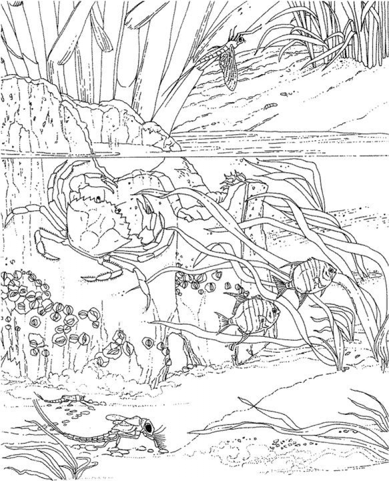 Ocean Coloring Pages for Adults   yo7m3