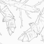 Realistic Bat coloring pages printable   85167