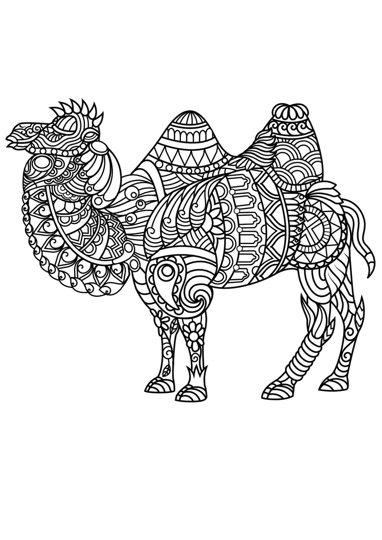 Get This Adult Coloring Pages Animals Camel 1