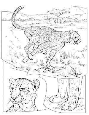 Free Printable Cheetah Coloring Pages – l67vb