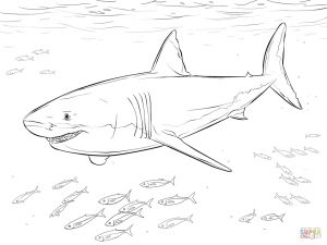 Shark Coloring Pages for Adults – 42719