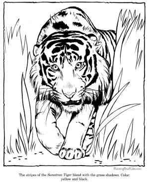 Tiger Coloring Pages to Print for Free – 37011
