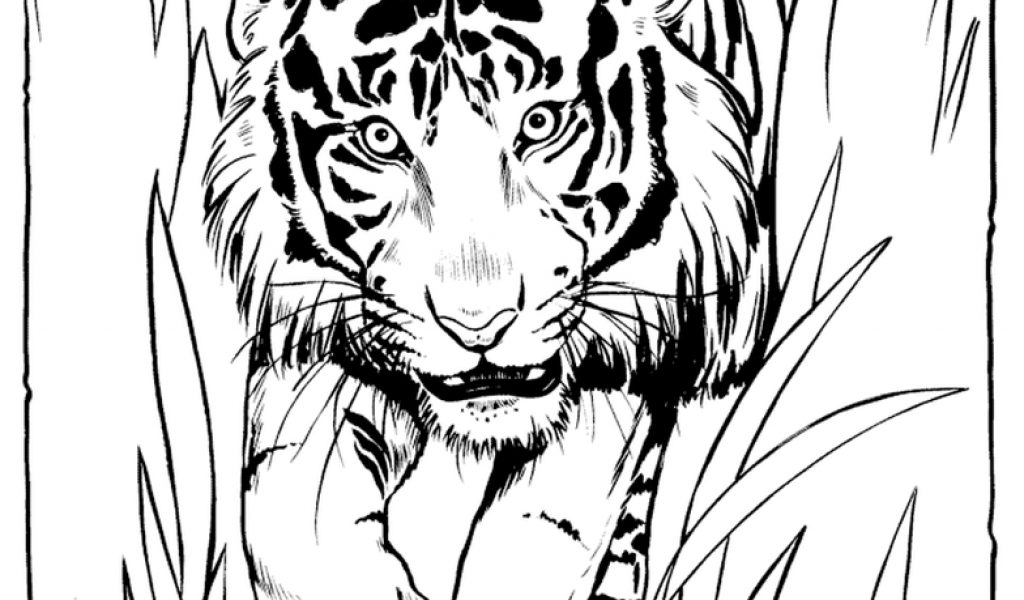 Get This Tiger Coloring Pages to Print for Free  37011
