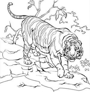 Tiger Coloring Pages to Print for Free – 46021