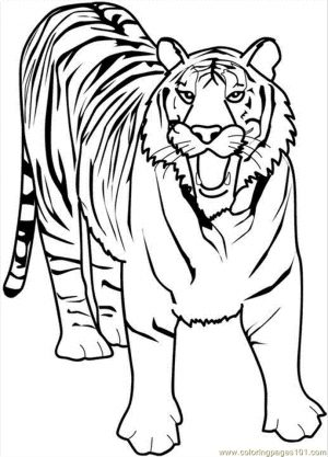 Tiger Coloring Pages to Print for Free – 90316