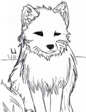 Artic fox coloring pages – 98994