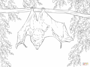 Bat coloring pages for adults   77192