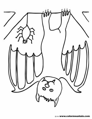 Bat coloring pages preschool   67211