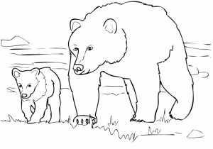 Bear Coloring Pages for Kids   tsf47