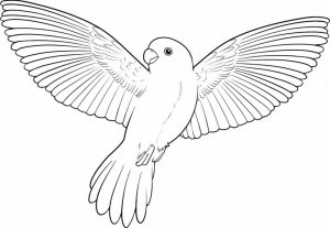 Bird Coloring Pages Kids Printable   06741