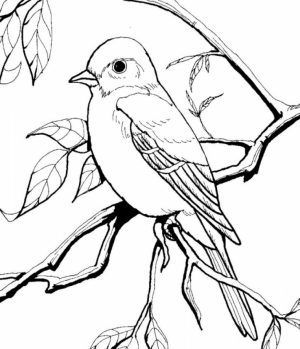 Bird Coloring Pages to Print for Kids   71530