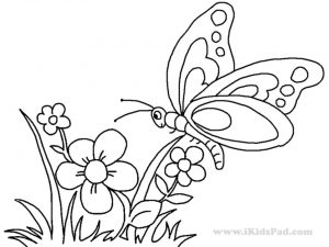 butterfly on flower coloring pages – 893ag