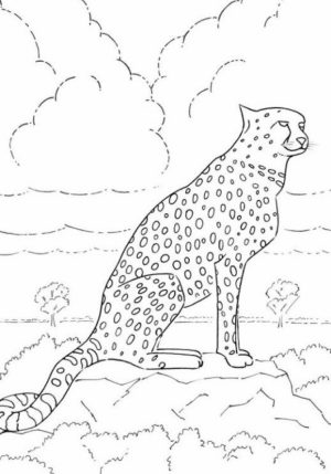 Cheetah Coloring Pages to Print   atw85