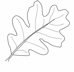 fall leaves coloring pages for kindergarten   857ag