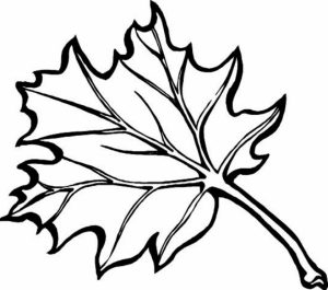 fall leaves coloring pages for kindergarten   ya630