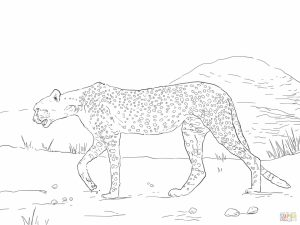 Free Printable Cheetah Coloring Pages   bgu5l