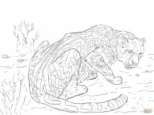 Free Printable Cheetah Coloring Pages   tam2l