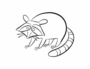 Free Raccoon Coloring Pages to Print   62617