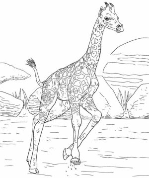 Giraffe Coloring Pages Hard Printables for Older Kids   46178