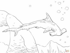 Hammerhead Shark Coloring Pages   33189