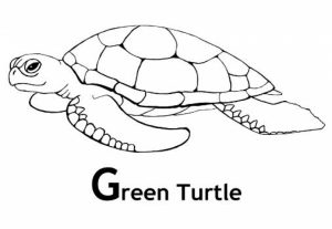 Image of Turtle Coloring Pages to Print for Kids   uan64