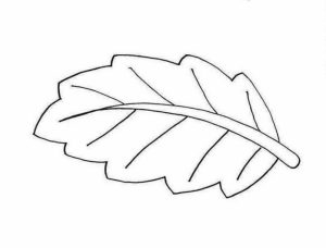 Leaf Coloring Pages Free to Print   63ac6