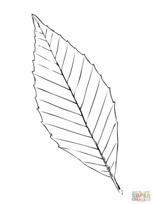 Leaf Coloring Pages Free to Print   97381