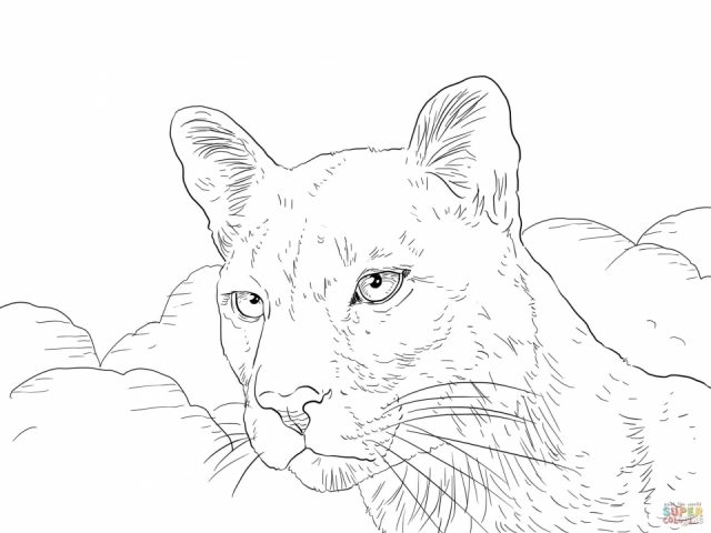 Mountain Lion Coloring Pages RealisticLionPrintable Coloring
