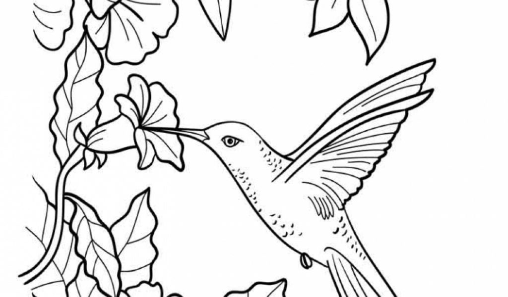 Hummingbird Coloring Pages Hummingbird Coloring Pages Team Colors