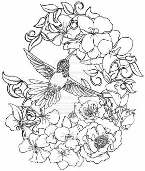 Online Hummingbird Coloring Pages   38730