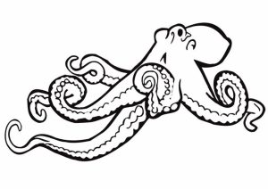Online Octopus Coloring Pages   jzj9z
