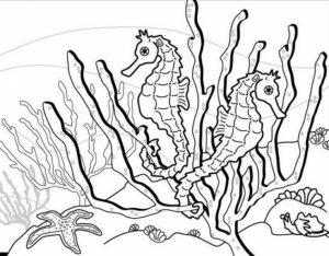 Online Seahorse Coloring Pages   88361
