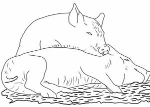 Pig Coloring Pages Free   88503