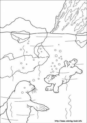 Preschool Printables of Polar Bear Coloring Pages Free   b3hca