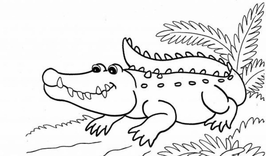 printable coloring pages alligator printable coloring pages